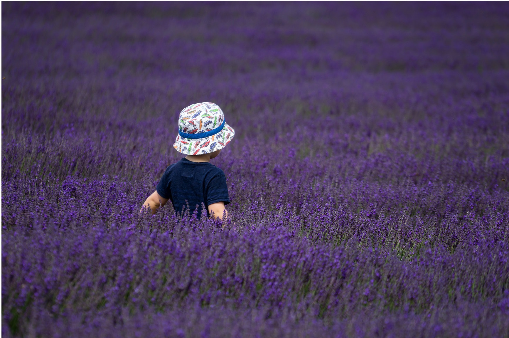Photo showing a young child wearing a t-shirt and sunhat sitting in a field of lavender